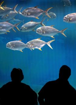 Cincinnati Seniors Enjoy the Life Aquatic at the Newport Aquarium