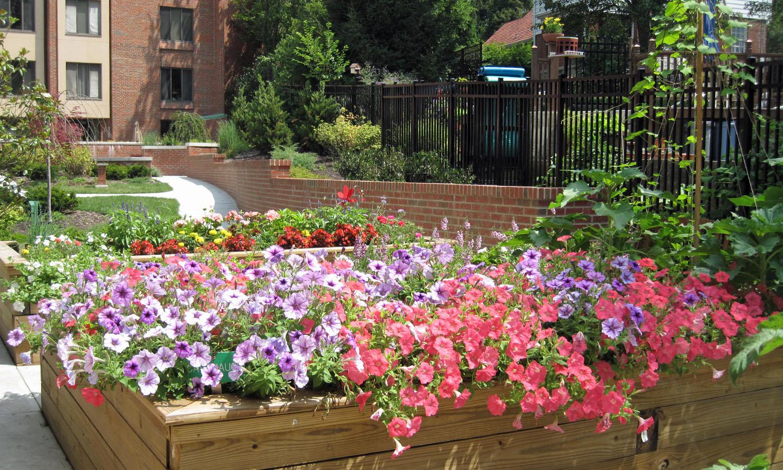 Garden_Jul_4_1893A.jpg