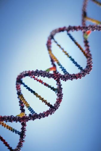 Model of a DNA strand