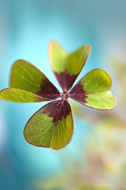 march four leaf clover