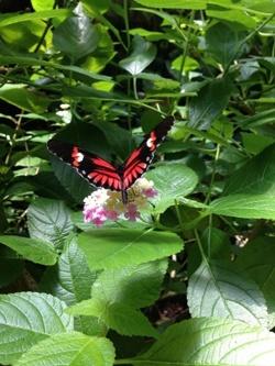 cincinnati-zoo-butterfly-house