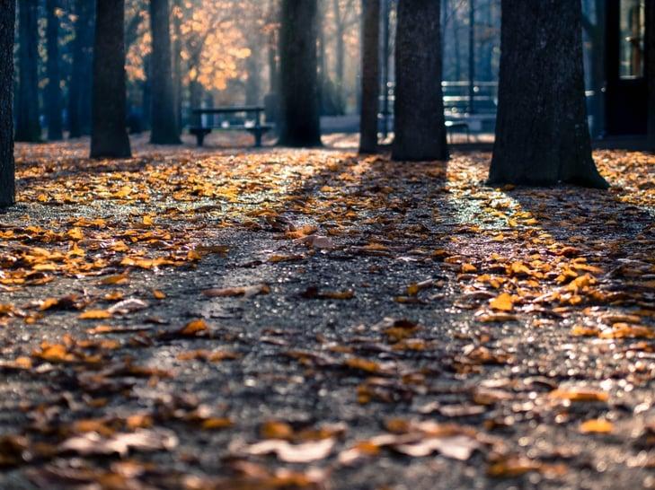 fall-dh.jpg
