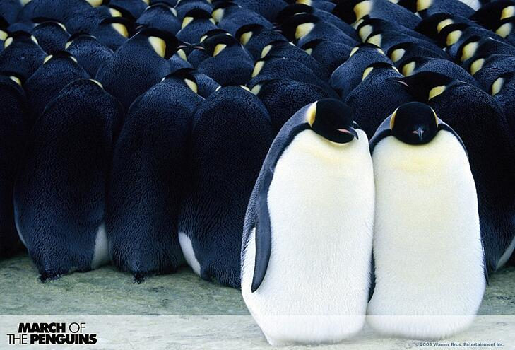 march-of-the-penguins-02_opt.jpg