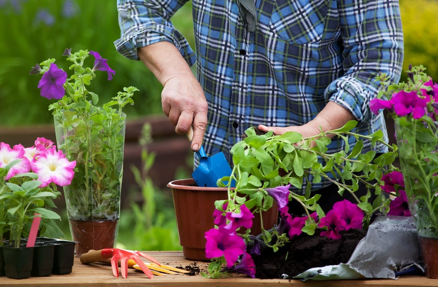 How to Garden in Your Retirement Community