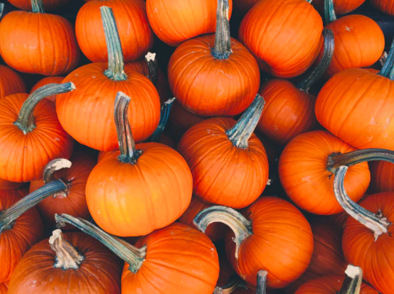 What's Happening at Episcopal Church Home in October?🎃