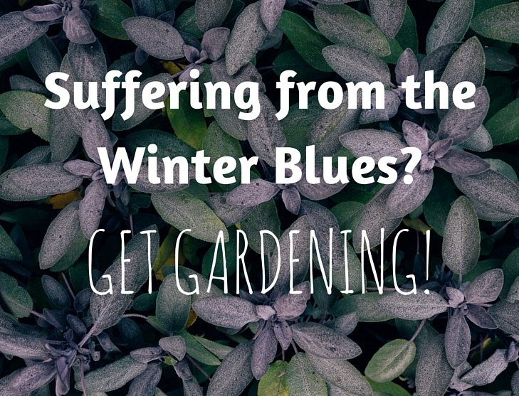 Suffering from the Winter Blues? Get Gardening!