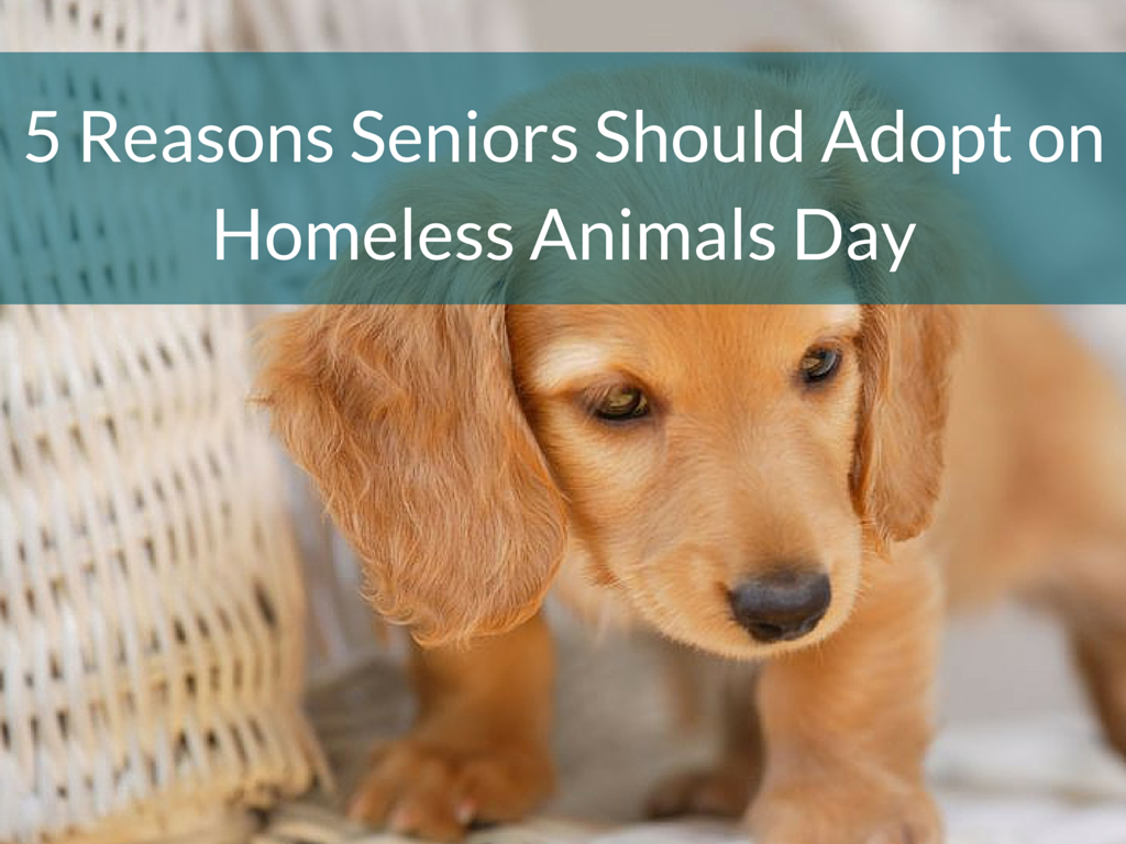 5 Reasons Seniors Should Adopt on Homeless Animals Day